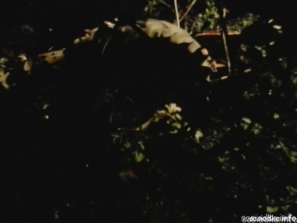 sasiadka_wypadek14